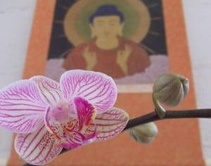 What is Tao Sangha?