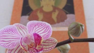 Tao Sangha