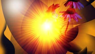 summer-solstice-ii-patricia-motley